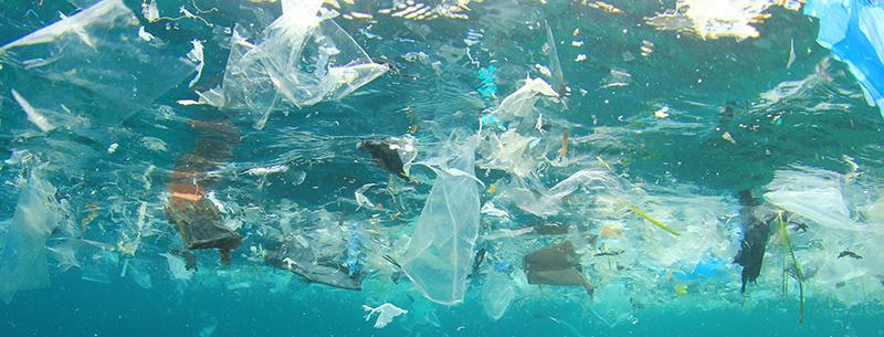 GOBI Coordinator seeks alternatives to single-use plastics at the UN