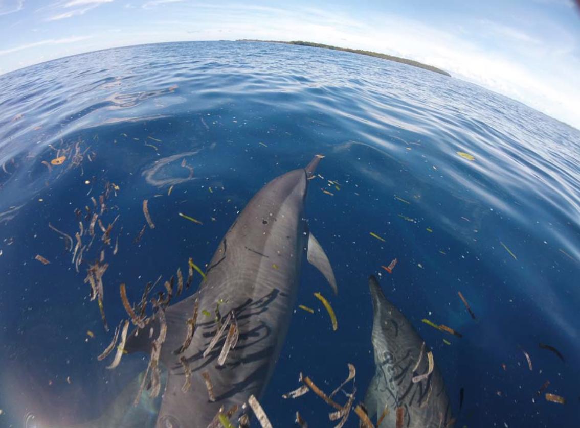 GOBI milestone reached in marine mammal conservation
