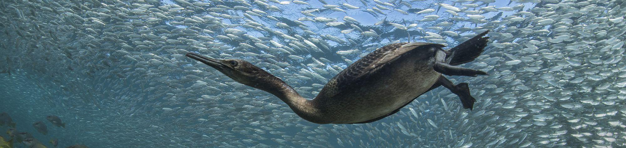 Webinar on seabird conservation now available